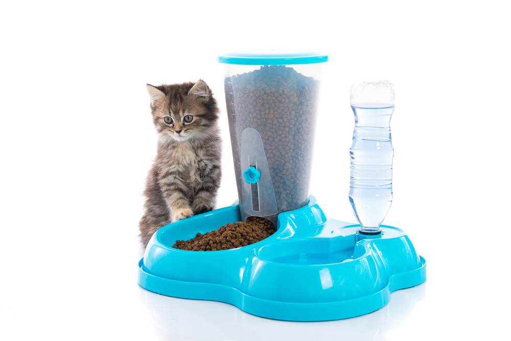 gadget flow portfolio catspad feeder automatic cat