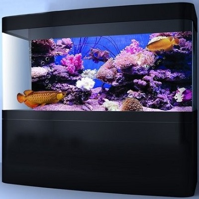 How To Decorate A Fish Tank With Household Items Best For My Pets